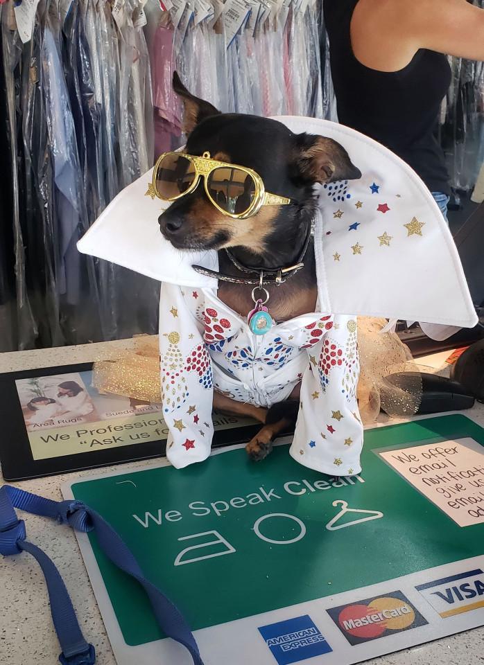 Chú chó sở hữu tủ quần áo chục nghìn USD, không bao giờ mặc một bộ hai lần