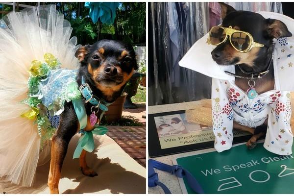 Chó sở hữu tủ quần áo chục nghìn đô, không bao giờ mặc một bộ hai lần