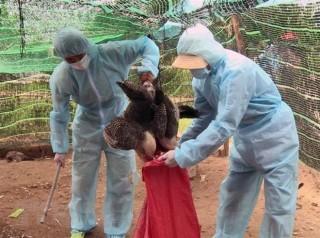 Cần Thơ đã hoàn thành kế hoạch tiêm phòng cúm gia cầm 2 đợt trong năm