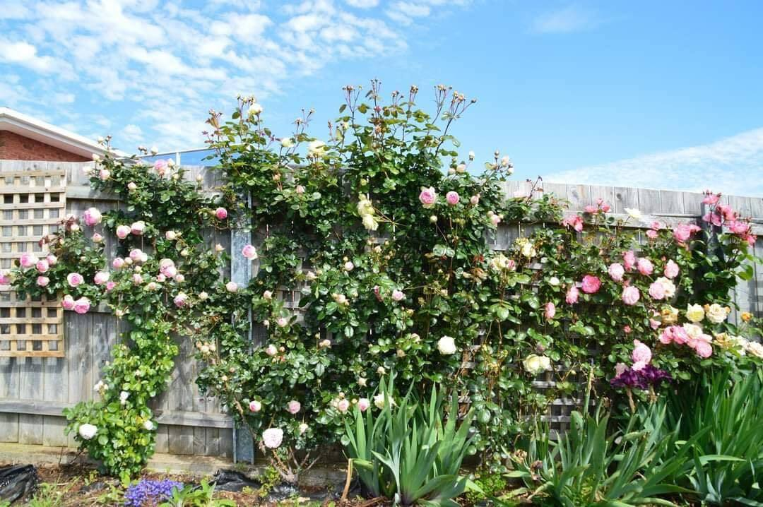 vườn hoa đẹp 6