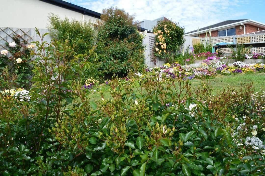 khu vườn đẹp 3