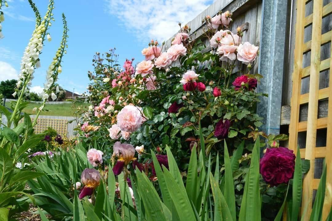 vườn hoa đẹp
