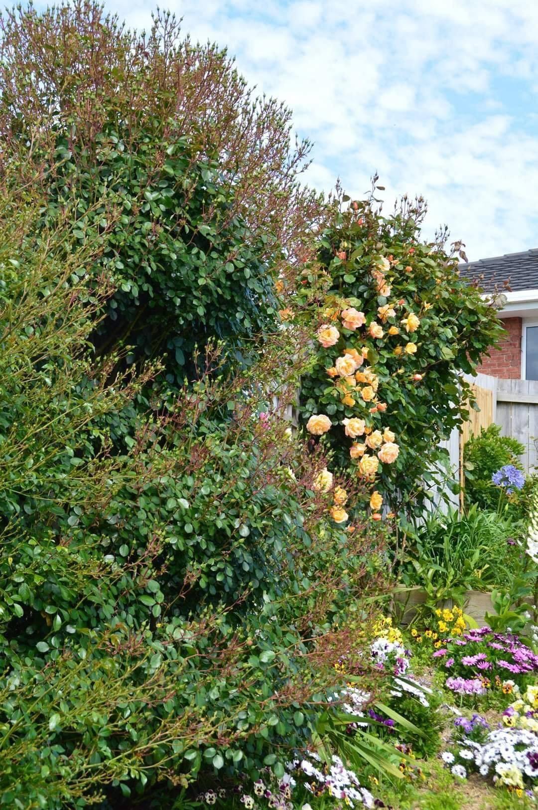 vườn hoa đẹp 1