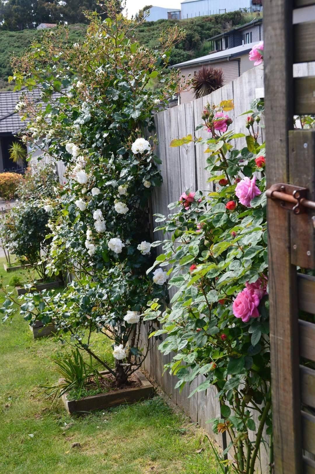 vườn hoa đẹp 3