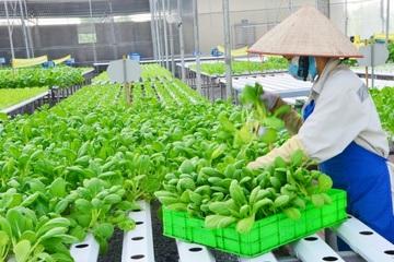 Hà Nam phát triển bền vững ngành nông nghiệp công nghệ cao