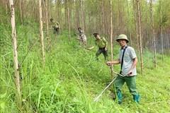 Bắc Giang phát triển lâm nghiệp bền vững