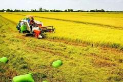 Hà Nam phát triển vùng trồng lúa nước bền vững, bảo vệ môi trường