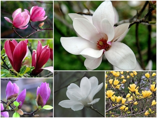 Người Hà Nội chi tiền triệu đặt mua cây hoa đẹp lạ chuẩn bị chơi Tết