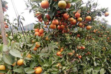 Hưng Yên thu trái ngọt nhờ thực hiện hiệu quả công tác giảm nghèo