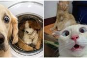 Phì cười với những khoảnh khắc hài hước thú vị của thú cưng