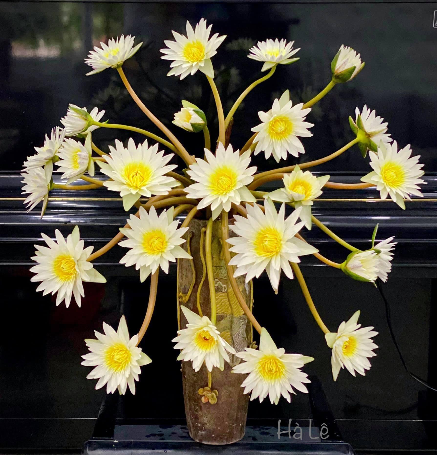 cách cắm hoa cúc họa mi