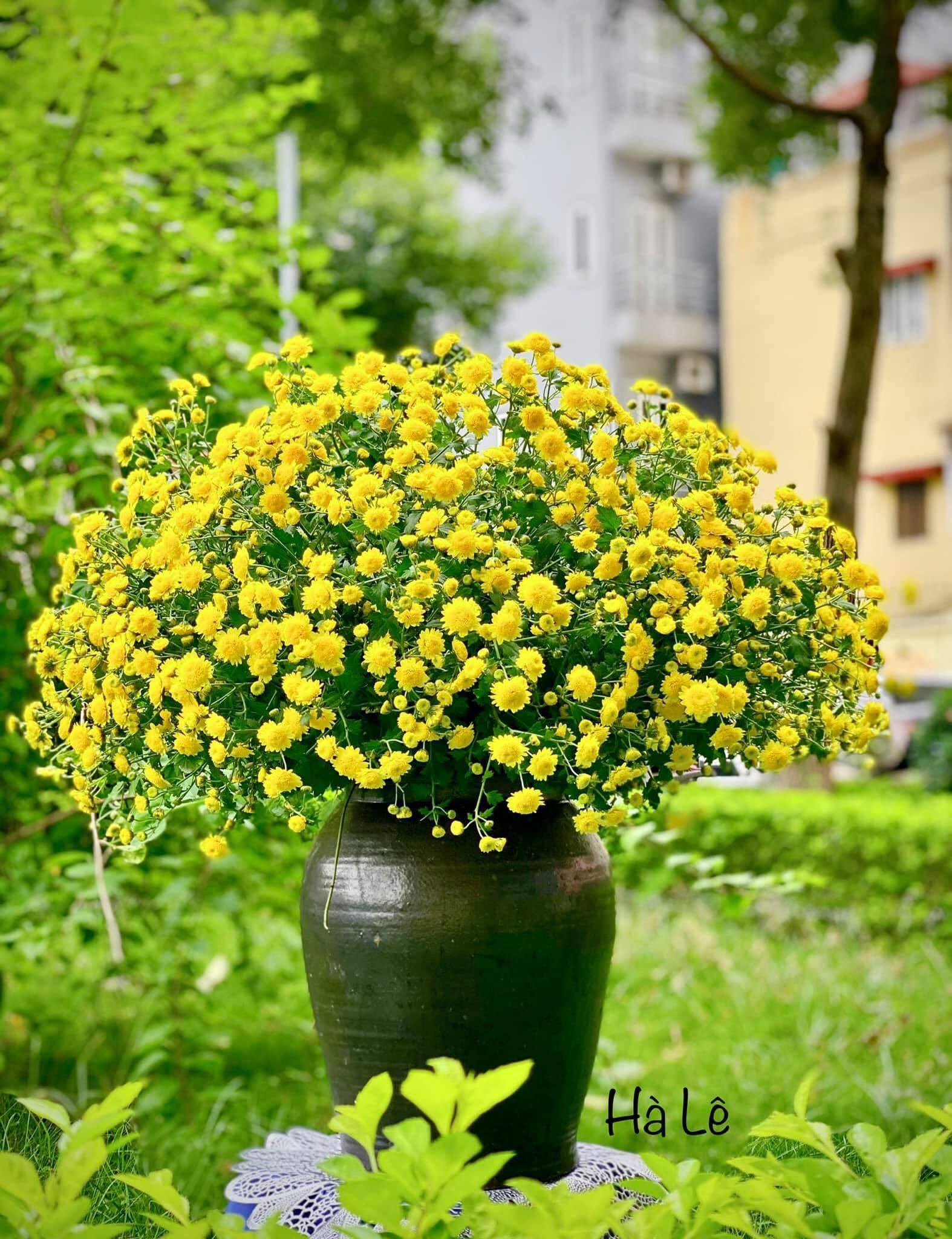 mẫu cắm hoa đẹp 13