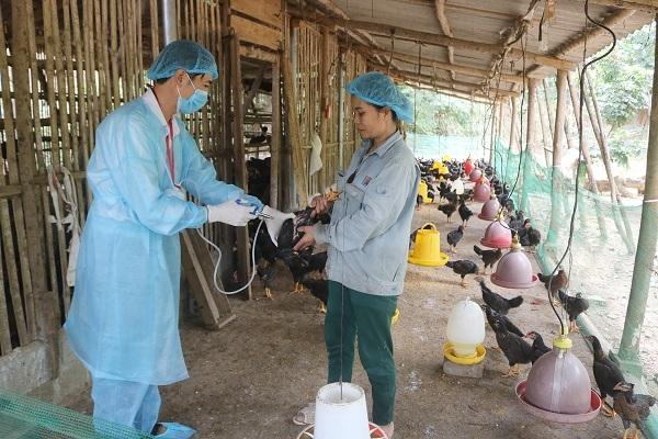 Phòng chống dịch cúm gia cầm