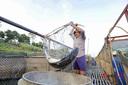 Phú Thọ: Nước sông Đà cạn kỷ lục, người nuôi cá lồng tiếp tục bị ảnh hưởng