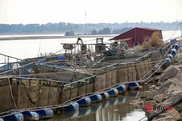 Phú Thọ: Nước sông Đà cạn kỷ lục, ngậm ngùi nhìn chục tấn cá chết dần giữa nắng gắt