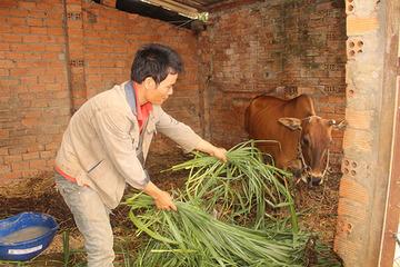 Đắk Lắk dự kiến cuối năm 2020 vượt chỉ tiêu được giao về giảm nghèo