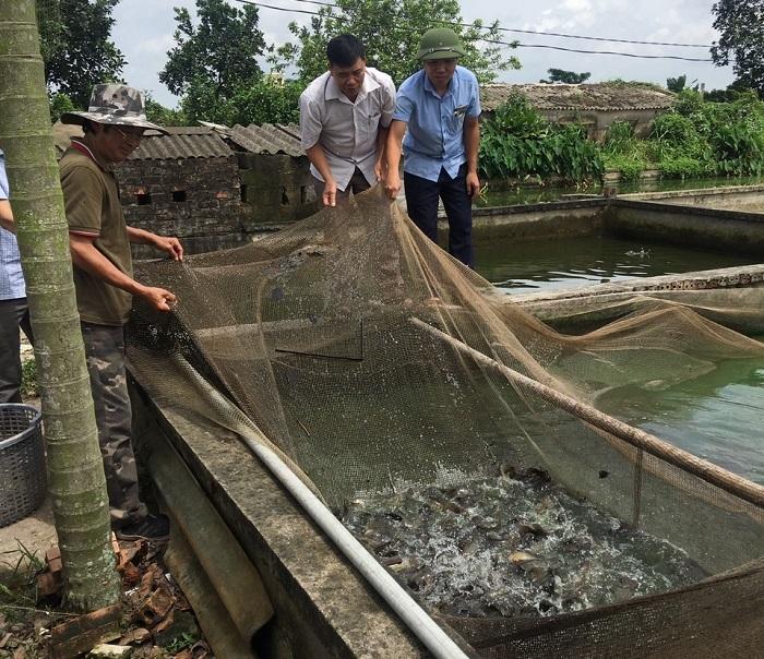 Nuôi cá rô đồng từ vùng đất bỏ hoang, nông dân Thái Bình thu tiền tỷ