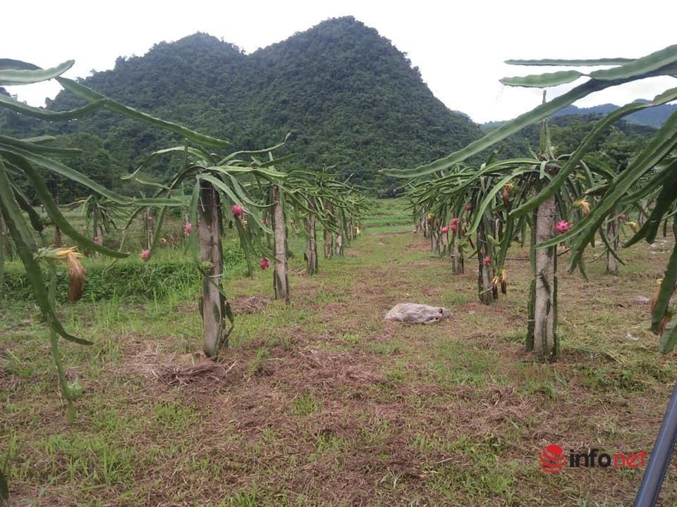 Yên Bái: Huyện Lục Yên tạo chuyển biến trong giảm nghèo bền vững