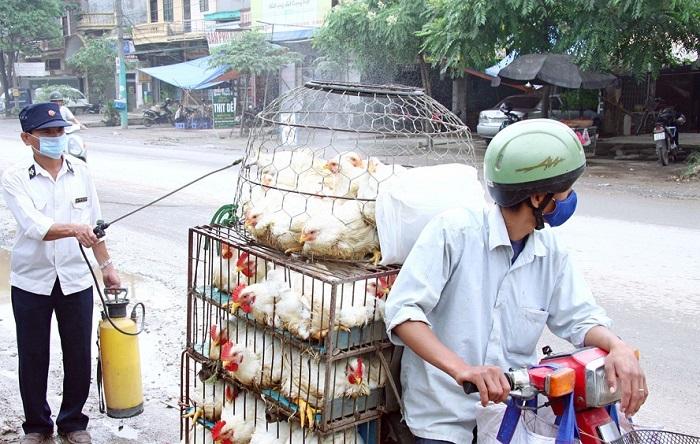 Hà Nội giám sát dịch bệnh gia cầm từ cơ sở, hộ chăn nuôi