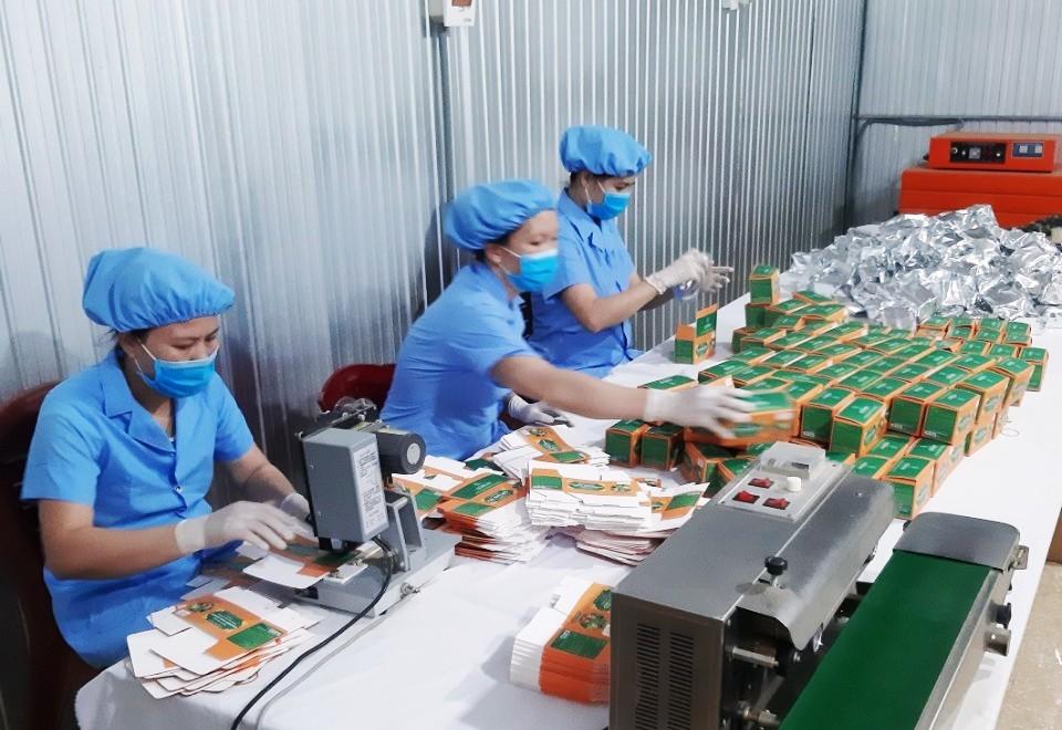 Ứng dụng KHCN, sản xuất theo chuỗi giá trị trà dược liệu Pù Mát