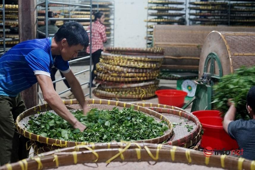 Nguồn vốn tín dụng ưu đãi giúp nhiều hộ dân ở Lộc Bình thoát nghèo