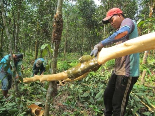 Quảng Ngãi: Trà Bồng phát huy hiệu quả nguồn vốn chính sách trong giảm nghèo