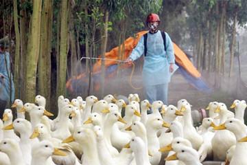 Khánh Hòa: Cấp 512.400 liều vắc xin cúm gia cầm, hoàn thành công tác tiêm phòng 2 đợt
