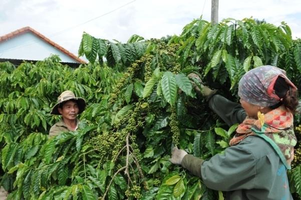 Hiệu quả nguồn vốn chính sách ở Kon Tum giúp người dân thoát nghèo