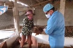 Vĩnh Phúc: Tam Đảo chủ động ngăn chặn dịch cúm gia cầm
