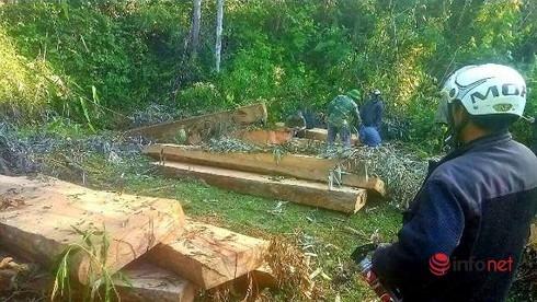 phá rừng,khai thác gỗ,Ea Kar,Đắk Lắk,bảo vệ rừng,công ty lâm nghiệp