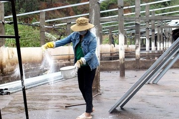 Quảng Ngãi lo nguy cơ bùng phát dịch bệnh gia súc, gia cầm sau mưa lũ