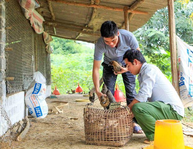 Nuôi hàng nghìn con gà Mông đen đặc sản, chủ trang trại gà ở Điện Biên thu cả tỷ đồng