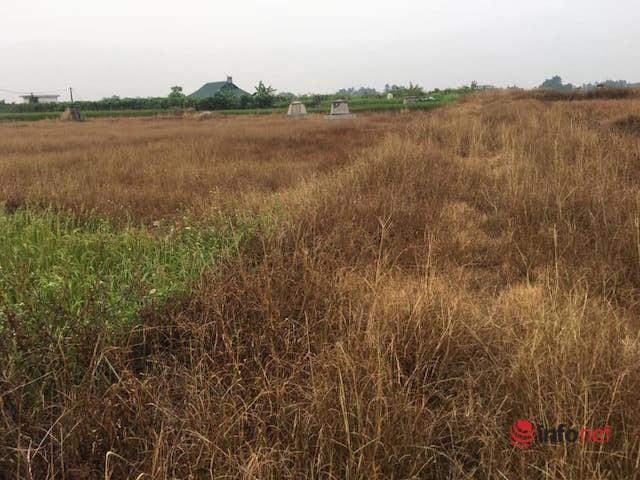 Giảm nghèo nhờ mô hình trồng cây gai xanh tại Ba Vì, Hà Nội
