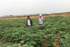 Liên minh HTX TP Hà Nội thúc đẩy quá trình xây dựng NTM tại các huyện, xã