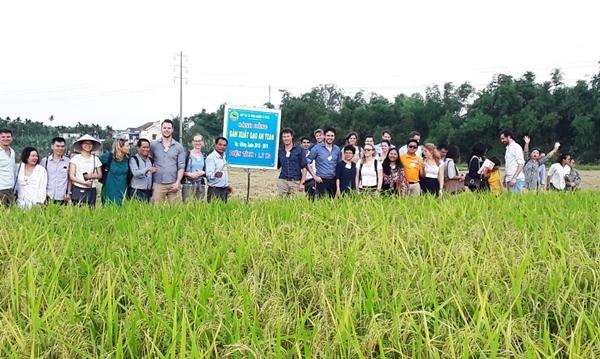 HTX Nông nghiệp Ái Nghĩa đi đầu trong liên kết sản xuất thực phẩm an toàn