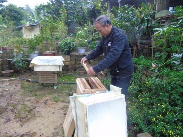 Quảng Bình: Tham gia HTX nuôi ong, nhiều hộ dân thoát nghèo