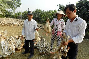 Hậu Giang tổ chức tiêu độc khử trùng các.chuồng trại gia cầm phòng chống dịch bệnh