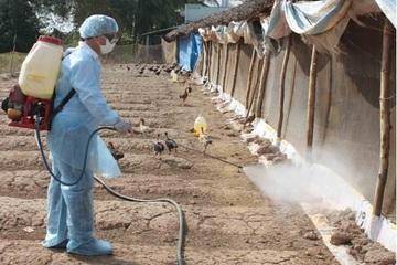 Phú Yên cấp 9.000 lít thuốc sát trùng phòng, chống dịch bệnh gia cầm