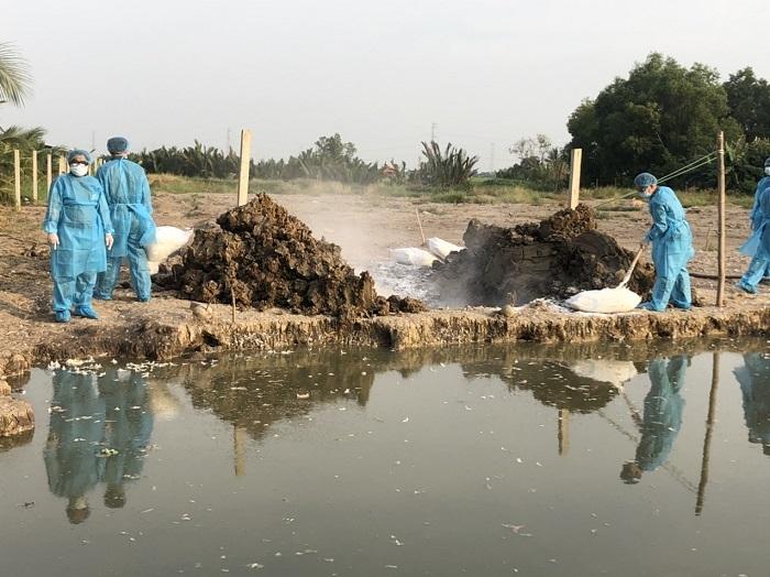 Long An: Phát hiện thêm một ổ dịch cúm A H5N6 ở Cần Đước