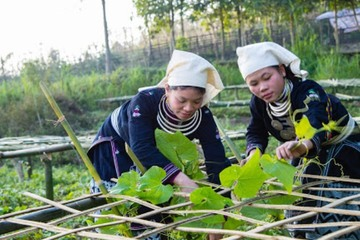 HTX hoạt động hiệu quả góp phần xây dựng nông thôn mới ở Tuyên Quang