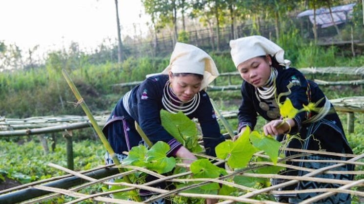 NTM,HTX,Tuyên Quang