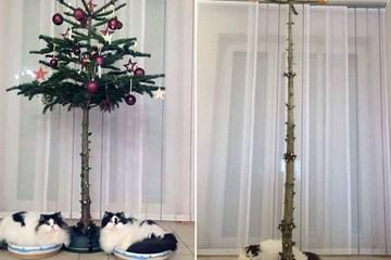 """Bằng chứng mối hiềm khích giữa """"boss"""" mèo và cây thông Noel"""