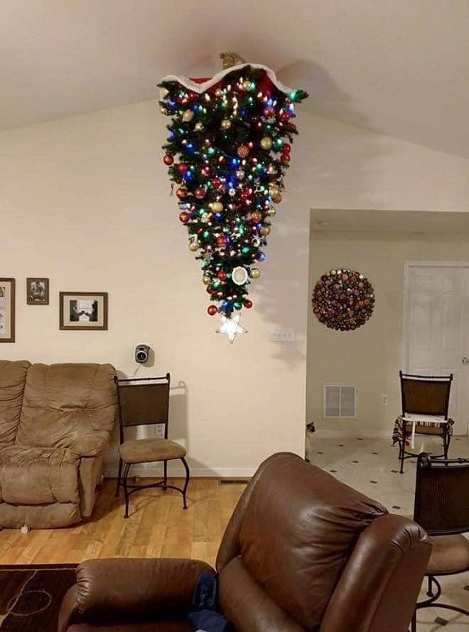 Bằng chứng mối hiềm khích giữa 'boss' mèo và cây thông Noel