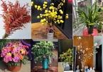 Cuối năm, nhiều người không tiếc tiền lùng cây, hoa lạ, độc về chơi Tết