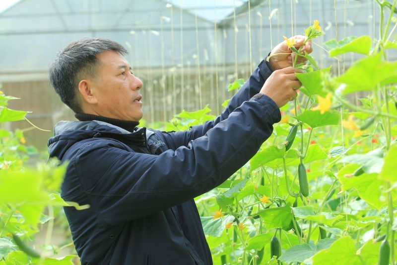 Lâm Đồng: HTX Dịch vụ Nông nghiệp tổng hợp Tân Tiến, tiên phong trong việc phát triển nông nghiệp công nghệ cao.