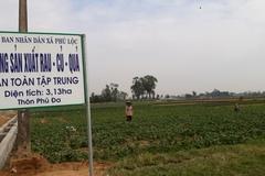 """HTX nông nghiệp Phú Lộc """"bà đỡ"""" cho sản xuất nông nghiệp"""