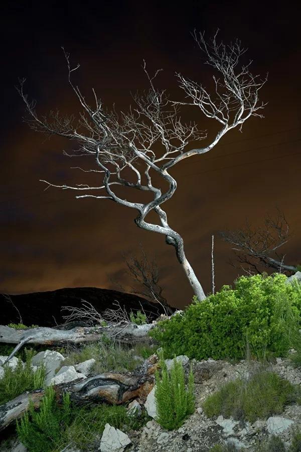 Những bức ảnh đoạt giải từ cuộc thi Earth Photo 2020