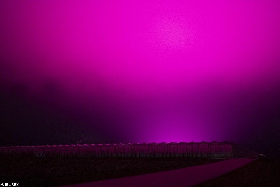 Bầu trời Thụy Điển bất ngờ chuyển sang màu tím lạ