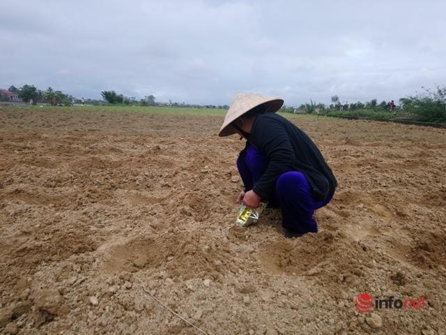 thiên tai,phòng chống thiên tai,ngập úng,mưa lũ,vựa hành lá,khan hiếm,thiệt hại do lũ,Thừa Thiên Huế,Huế