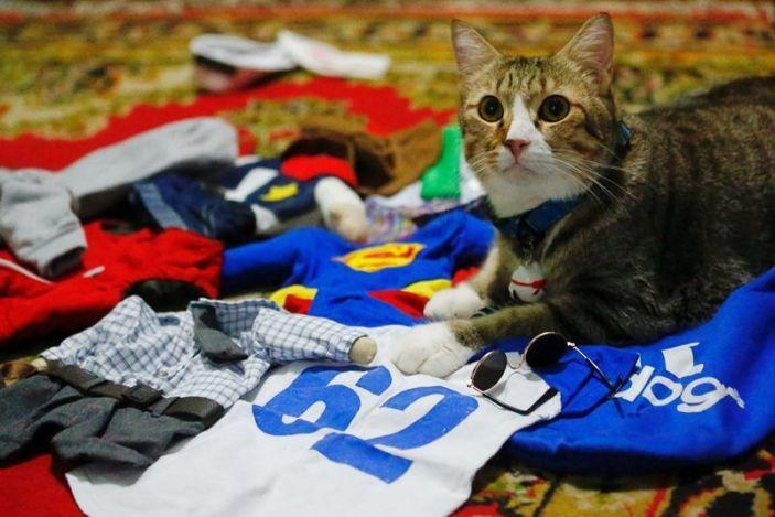 Nổi tiếng nhờ may quần áo tí hon cho mèo cưng